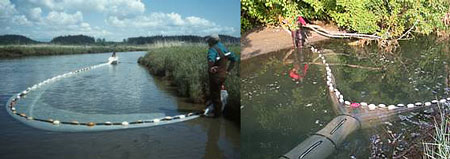 SRSC Research crew setting a beach seine in the delta; fyke trap in a lagoon.