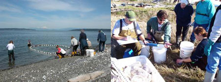 'Citizen scientist' Beach Watchers hauling a beach seine and recording fish data.