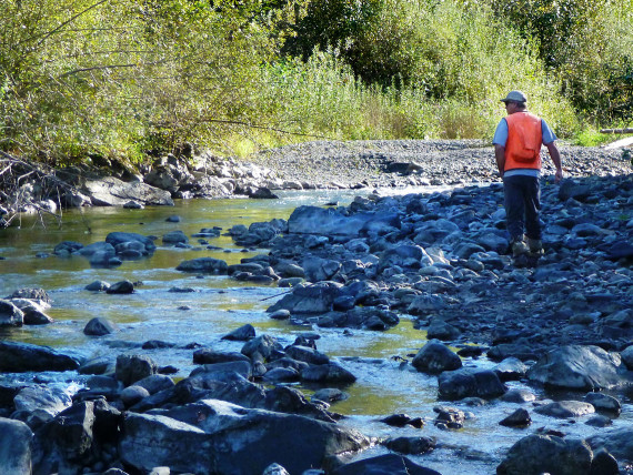 Biologist Mike Olis surveys salmon and steelhead habitat in lower Jackman Creek near Concrete.  The Forest and Fish program monitors habitat conditions and stream temperatures to evaluate the effectiveness of current forest management practices.