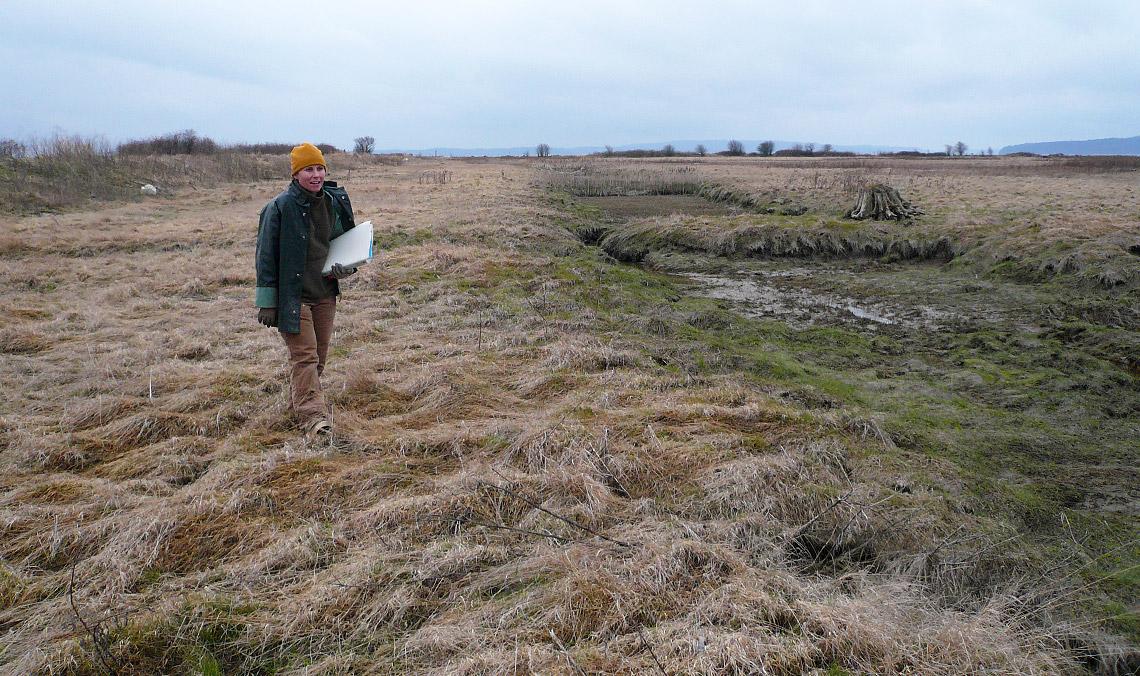 SRSC Restoration Ecologist Brenda Clifton surveys the site prior to restoration of tidal inundation.