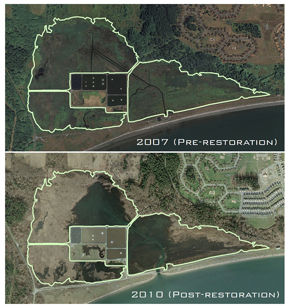 2007 (pre-project) and 2010 (post-project) photos of the Crescent Harbor Salt Marsh restoration site.